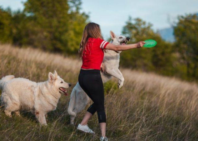 Ways to Train your Dogs with Velcro Syndrome