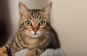 Tabby Cats: All You Need To Know About These Patterned Cats