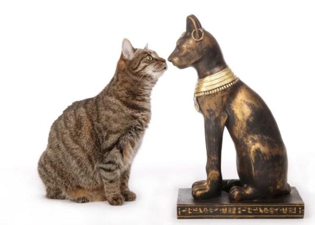 History of Tabby Cats