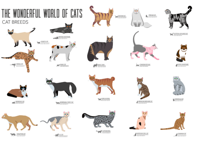 There Are Numerous Breeds with Tabby Patterns