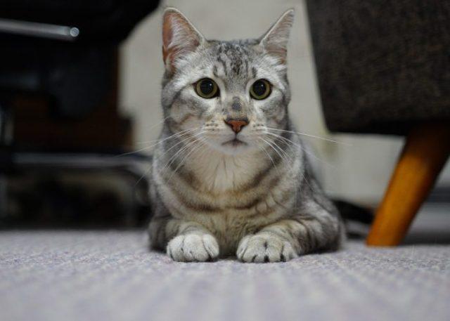 Tabby Cats' Health