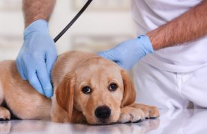 Most Common Health Conditions in Dogs To Look Out For