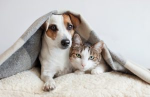 Introduce Your Cat and Dog Successfully: Important Tips To Remember