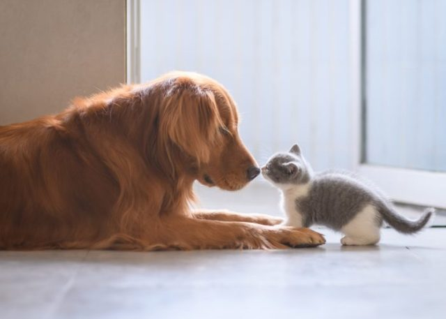 Tip #6: Desensitize Your Pet As Soon As Possible