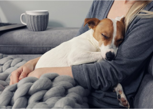 Health benefit of owning a dog- dogs aids recovery