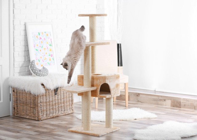 Why Buy a Cat Tree
