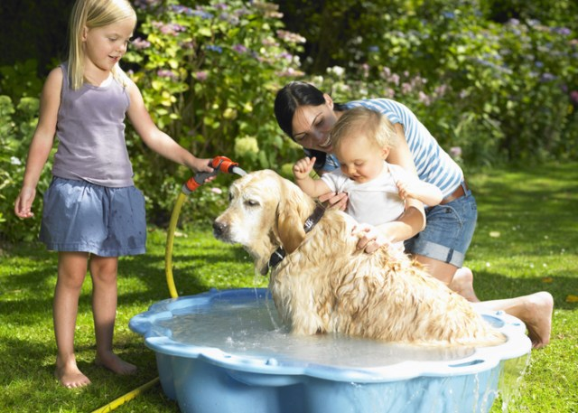Dogs happily bathing