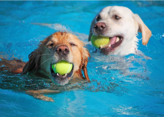 Dogs happily playing in the water