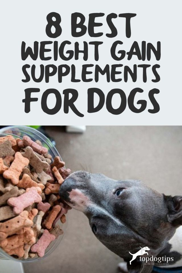 8 Best Weight Gain Supplements for Dogs