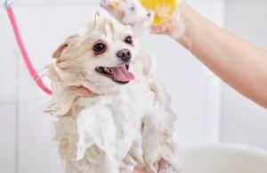 DIY Whitening Dog Shampoo