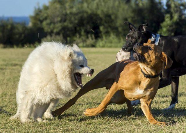 1. When Dogs Meet...