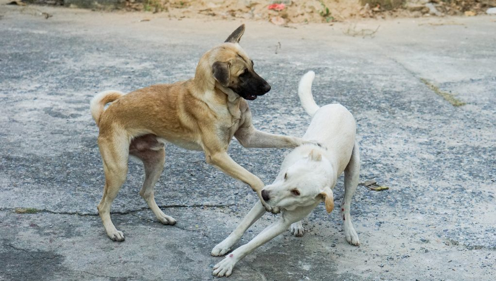 Dog Fights: An Informative Guide On How To Stop Them