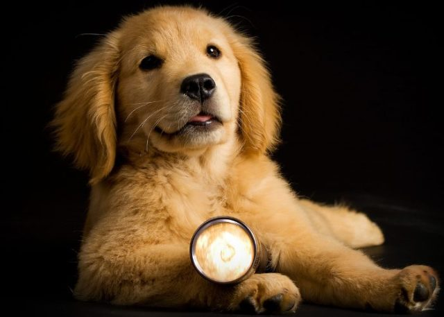 6. Utilize Light in Training Your Pooch