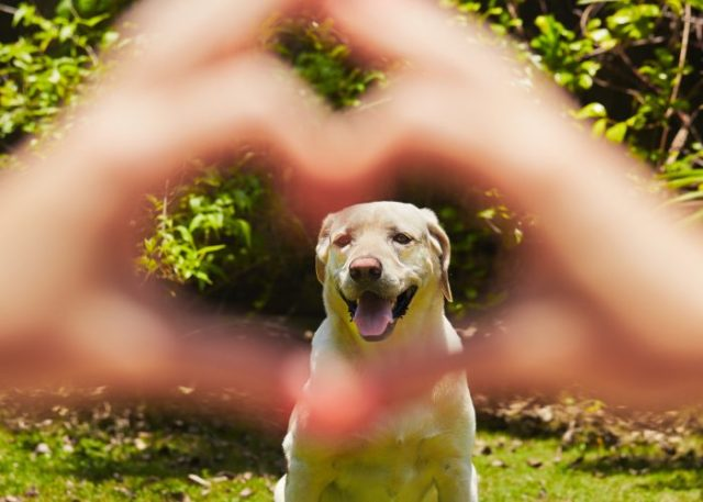 8. Dogs Learning Through Sign Language