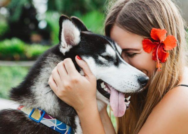 9. Teach Your Dogs Through Positive Reinforcement