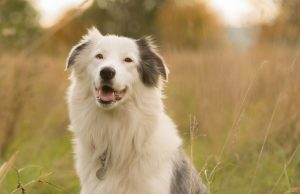 Hearing Loss In My Dog And What To Do: An Informative Guide