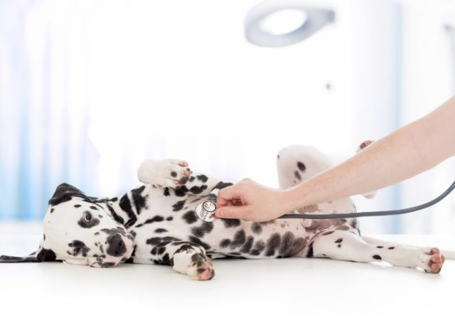 Disadvantages of Getting Pet Insurance