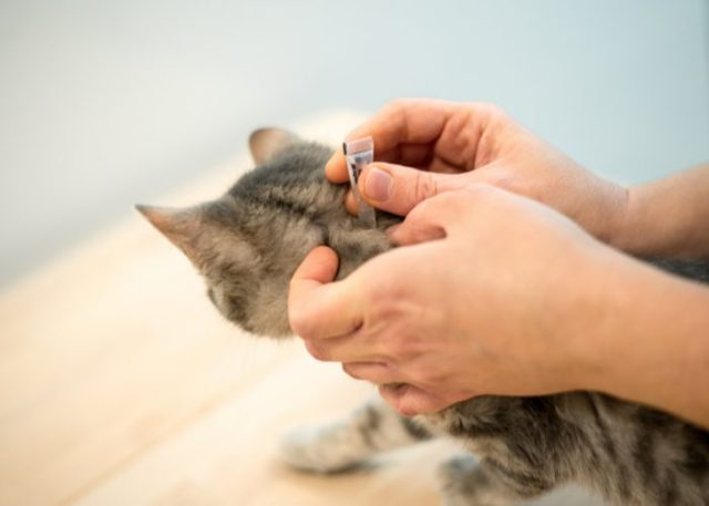 3. With pet insurance, you can effectively budget for other pet care costs.