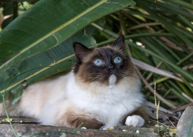 Evolution of Cats: A Brief History of House Cats