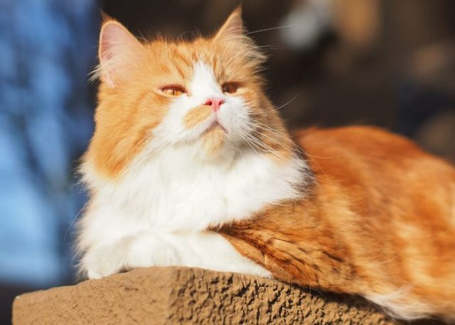 Evolution of Cats: Ancient House Cat Mystery