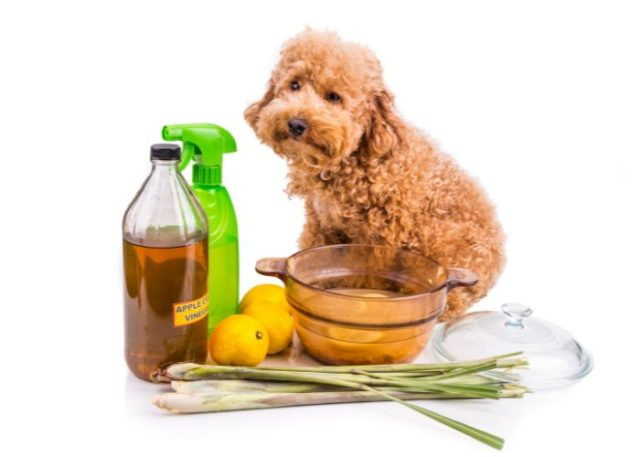 Natural Dog Repellent Spray Products That You Can Use
