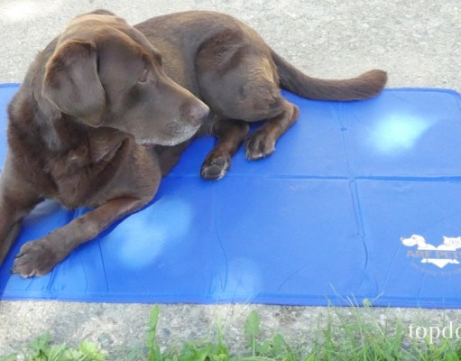 Arf Pets Cooling Mat