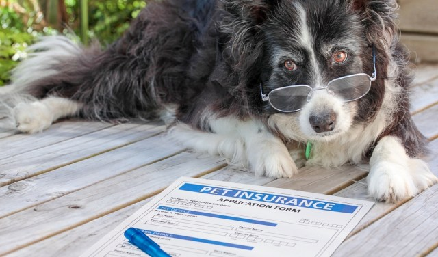 Do You Need Pet Insurance?