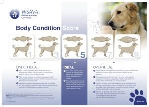 Dog BCS Chart