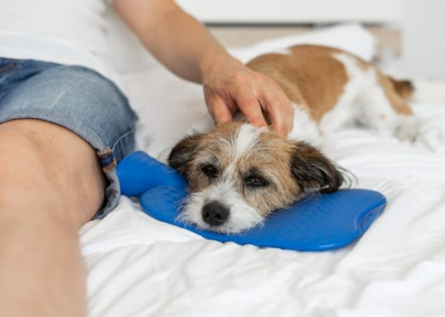 20 Reasons Why Your Dog Won't Eat or Drink: 2. The Dog Has a Tummy Ache