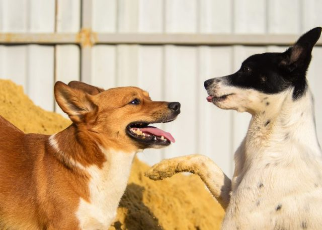 20 Reasons Why Your Dog Won't Eat or Drink: 13. Intimidation by Another Pet