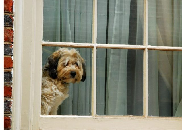 20 Reasons Why Your Dog Won't Eat or Drink: 17. Impending Change
