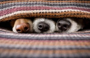 Multi-Dog Home Guide: What is a Multi-Dog Household