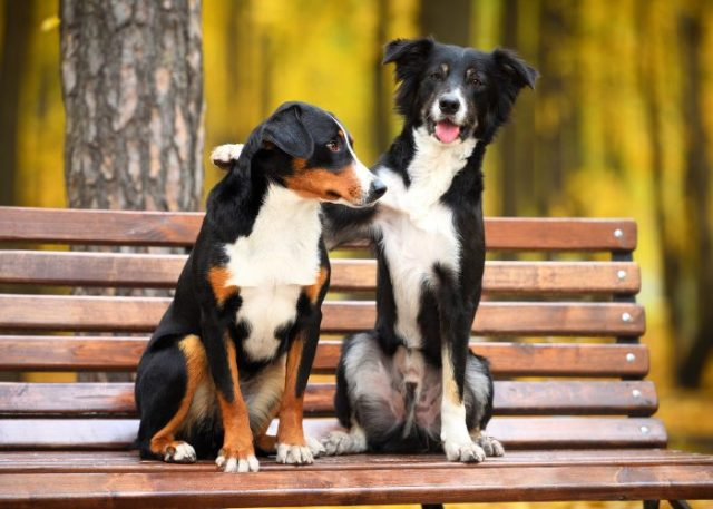 1. Consider your pup; are they okay with a multi-dog household?