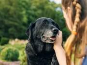 Senior Dog Home Preparation: Tips and Tricks For Comfort