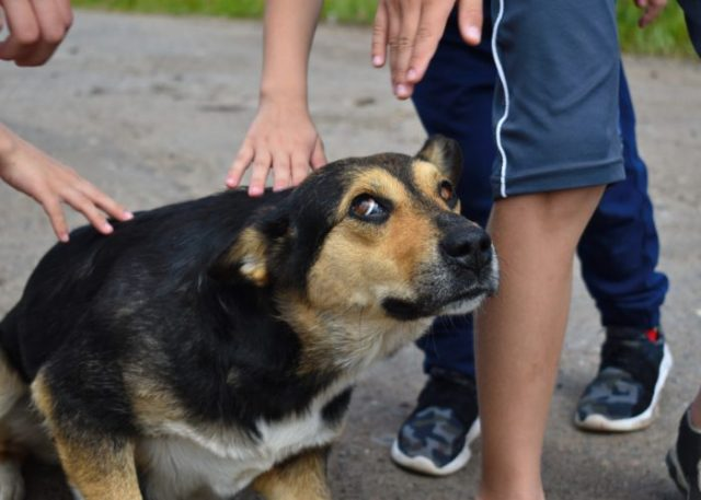 Adopting/Buying a new dog will make my children responsible
