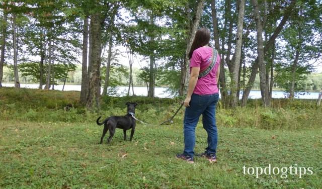 LifeHandle Hands Free Dog Leash