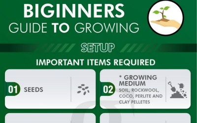 Indoor Growing Set-up Infographic – Beginners Guide