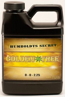 Humboldts Secret - Golden Tree