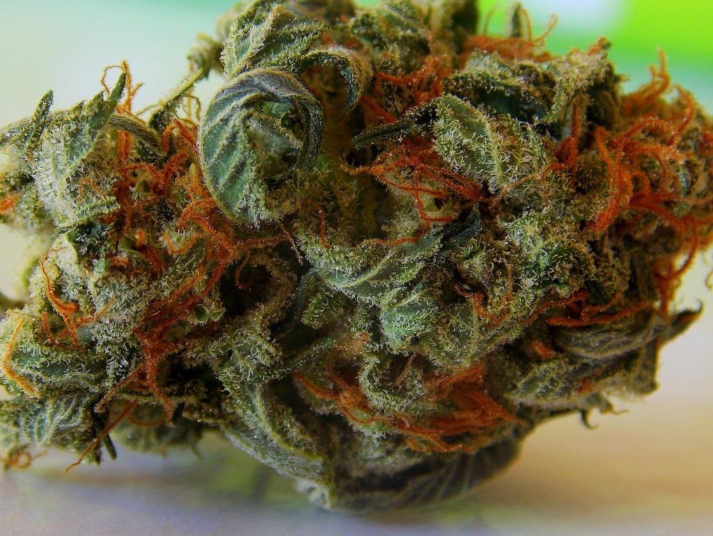 Drying marijuana