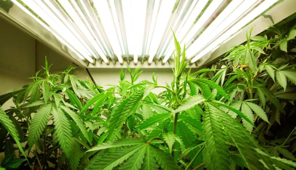 indoor-growing-lighting