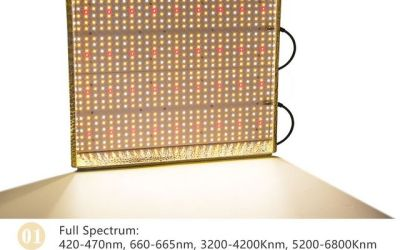 Led Grow Lights Reviews | Read & Choose the Right One for