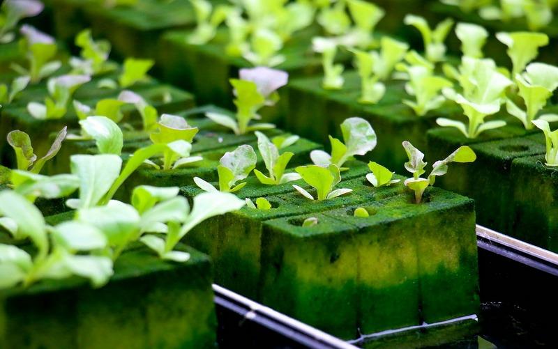 hydroponic farm planning