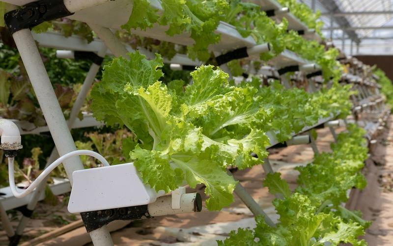 start a hydroponic farm business