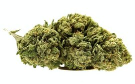 G-13 weed indica strain