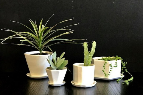 Succulent gift box