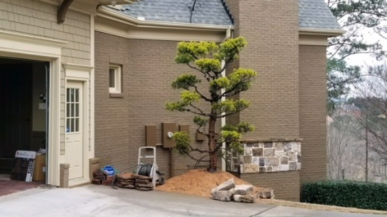 topiary-20180305-1751441
