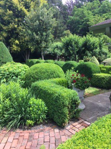 topiary-IMG-8931