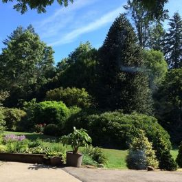 Fabulous use of conifers for contrasts