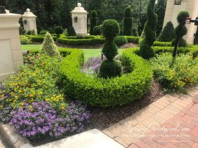 Fun parterre garden with thuja, boxwoods, and color-plenty of texture