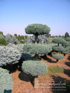 topiary-courtyard-product-w25